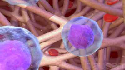 Les cellules saines réparent les dommages que peuvent causer le traitement