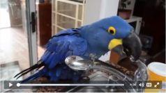 perroquet bain
